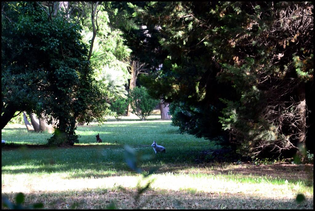 Зайчики в парке