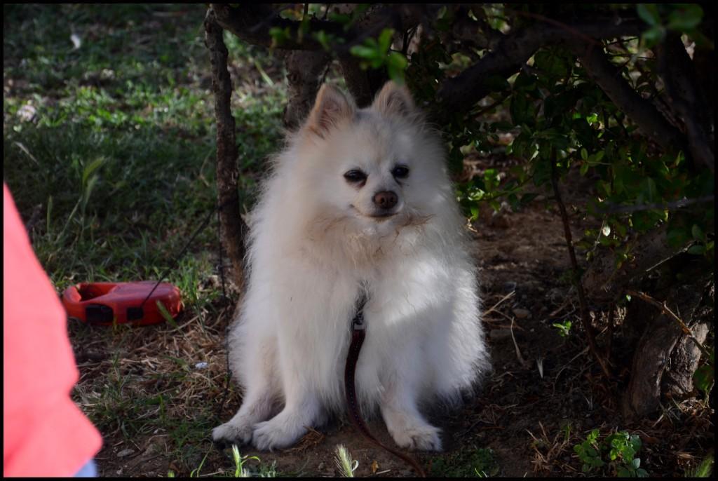 Собачка в тенечке