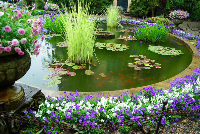 пруд с рыбками и голубыми цветочками